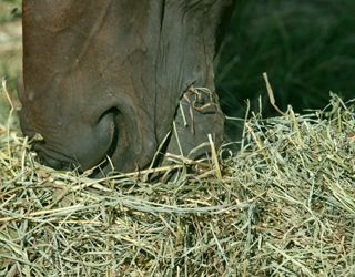 Alfalfa Hay: A Major Component in Many Horse Diets