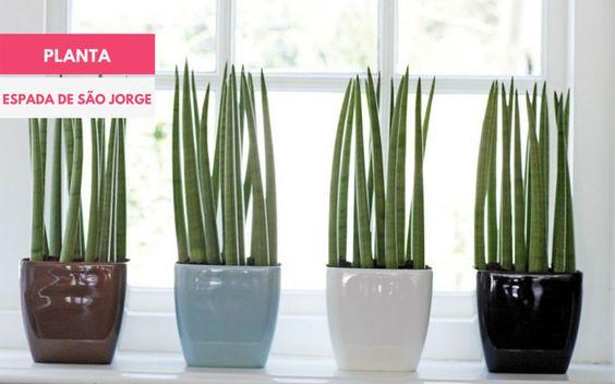 ESPADA DE SÃO JORGE >>> É a plantinha que purifica o ar. Ela absorve o dióxido de carbono, e emite oxigênio durante a noite.