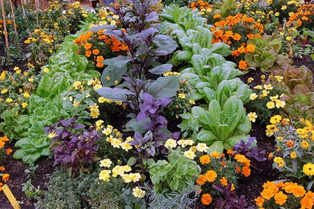 Natural Garden Pest Control through Companion Planting: Garden Pest, Planting Plant, Companion Gardening, Gardening Ideas, Garden Companion, Planting Vegetable, Companion Planting