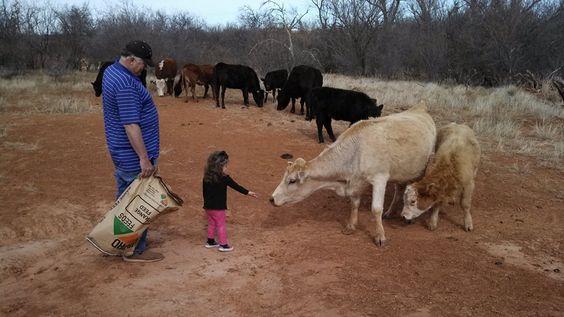 My friends grand baby, helping her Grandpa feed!