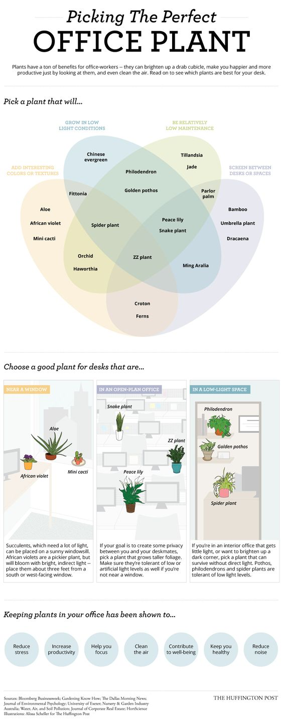 A plant at your desk can help you feel more productive, and they can make your desk look a little more exciting. This diagram can help you pick the right one for your specific office environment.