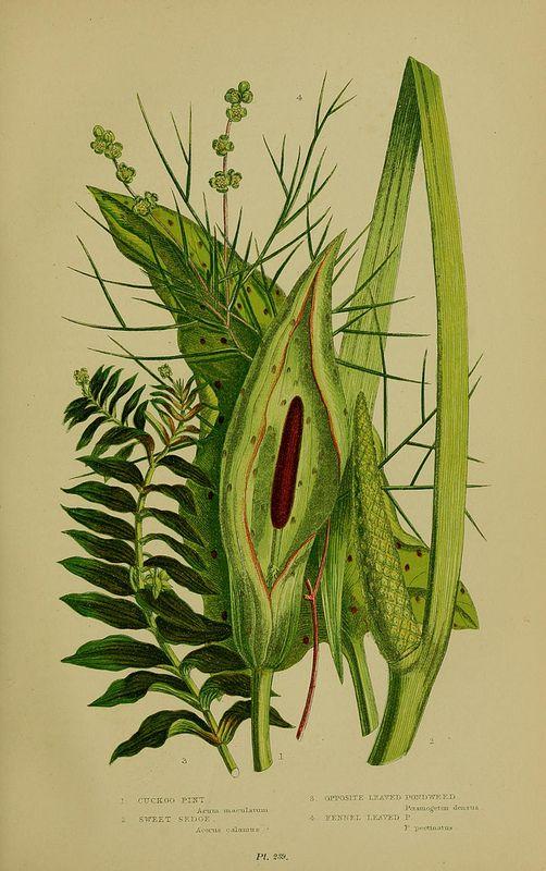 N48 W1150 Botanical Illustration Vintage Art Prints Botanical Drawings