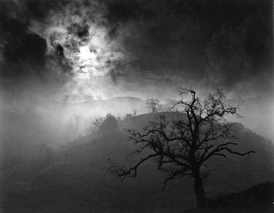 Wynn Bullock,Stark tree, 1956
