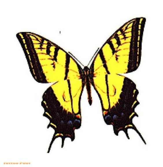 butterfly on yellow color - photo #45