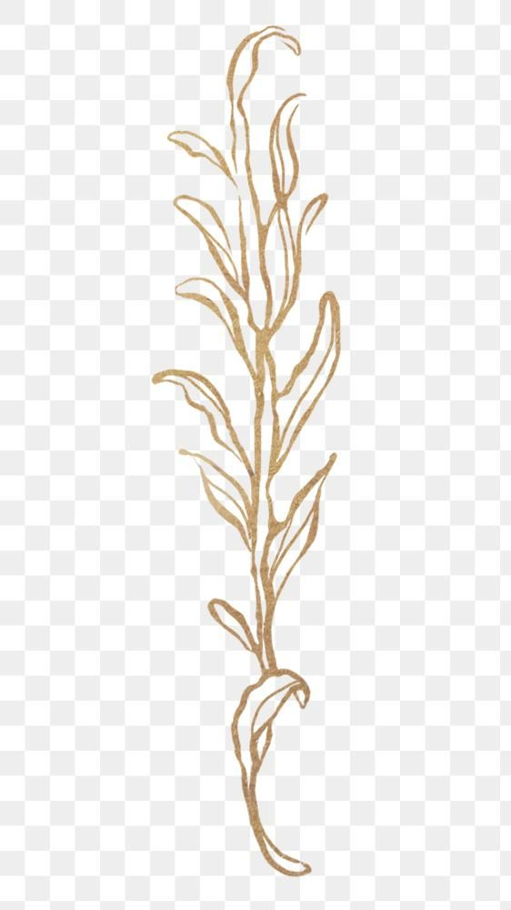 Detailed Golden Leaves Transparent Pg Premium Image By Rawpixel Com Nunny Golden Leaves Leaf Outline Flower Outline