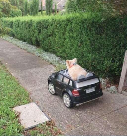 Animals おしゃれまとめの人気アイデア Pinterest Makiko Kato おもちゃの車 犬 ペット