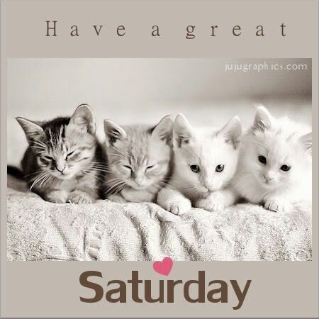 Have a great Saturday quotes quote cats morning weekend days of the week saturday saturday quotes happy saturday saturday morning: