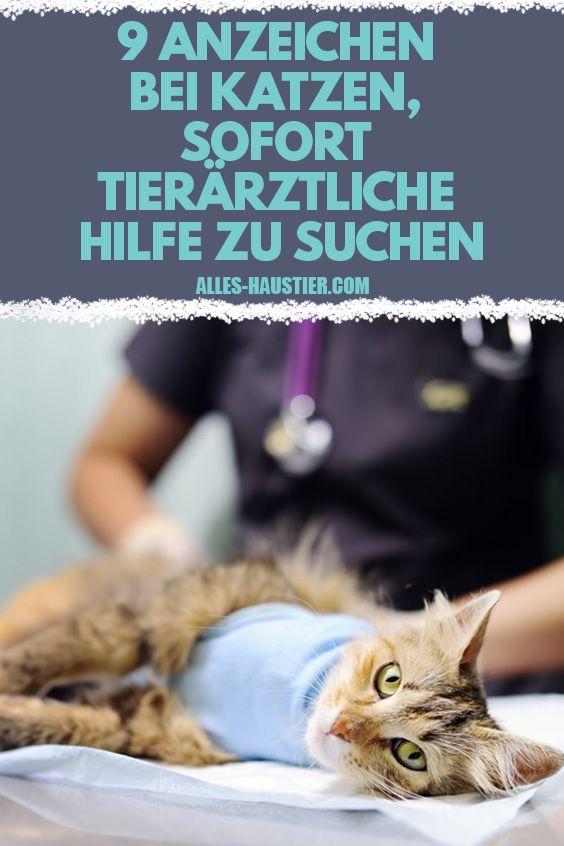 9 Anzeichen Bei Katzen Sofort Tierarztliche Hilfe Zu Suchen