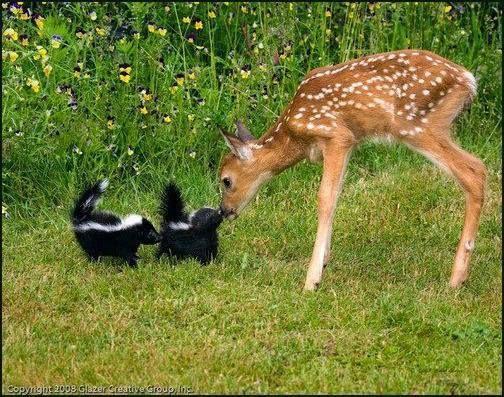 Bambi à retrouvé Fleur...: