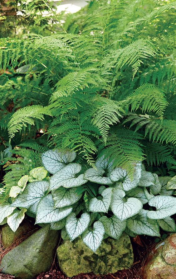 A Lovely Pairing For The Shade Shade Garden Plants Shade Plants Woodland Garden