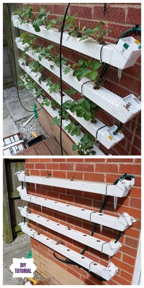 How To Grow Strawberries In Rain Gutter Planters Video Grow Gutter Planters Rain Strawberries Vide In 2020 Hydroponic Strawberries Hydroponics Diy Gutter Garden