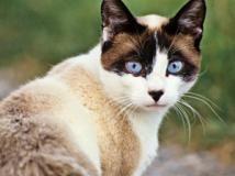 Los gatos se hicieron domésticos gracias a la agricultura hace 5.000 años