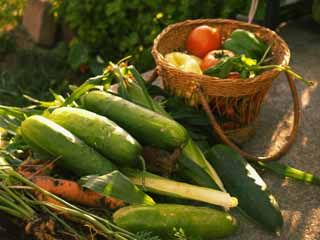 Controlling pests and disease in organic gardens