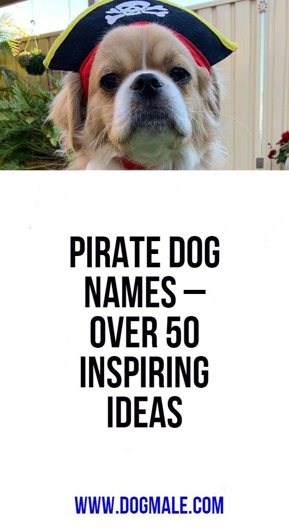 Pirate Dog Names Over 50 Inspiring Ideas Dog Names Dogs Pirate Names