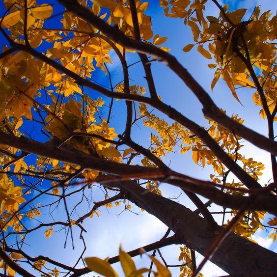 小さい秋みーつけた? (japan, hyogo)  #photo #photograph #art #cooljapan #autumn