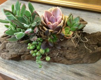 Popular items for succulent on Etsy