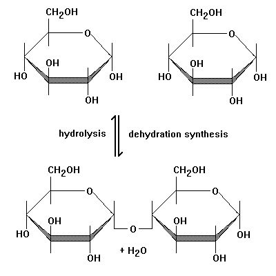 This diagram perfectly shows how Dehydration Reactions and ...