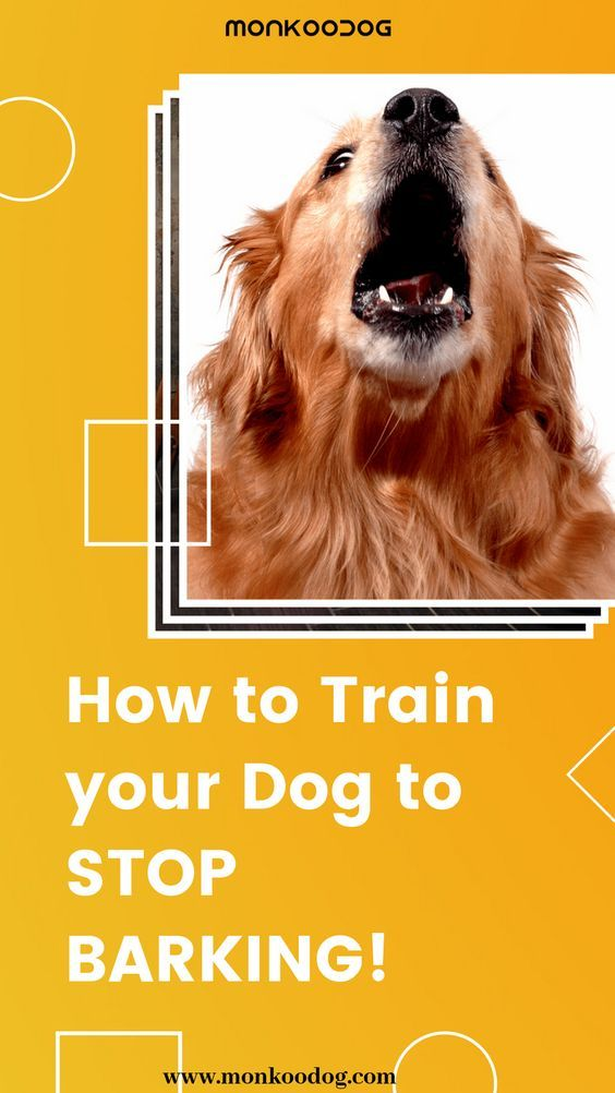 How To Stop My Dog S Barking Permanently Here Are My 6 To Help
