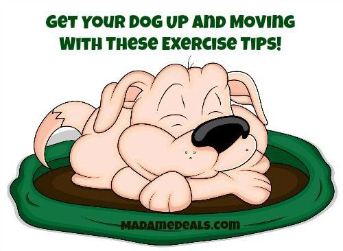 How to Exercise Your Dog http://madamedeals.com/how-to-exercise-your-dog/ #inspireothers #dogs