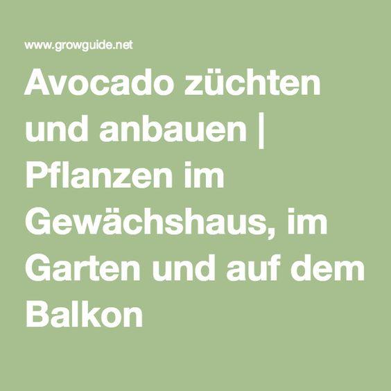 Avocado züchten und anbauen | Pflanzen im Gewächshaus, im Garten und auf dem Balkon