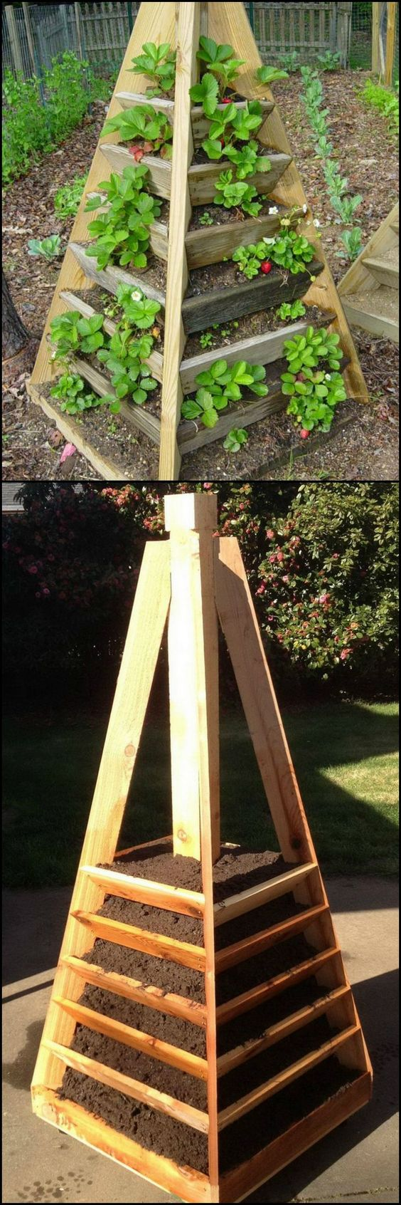 """Strawberries are easy to grow, but can take up a lot of room when planted as a traditional """"strawberry patch"""".     This pyramid planter gives you home grown strawberries while taking up only a fraction of the space of a typical garden.  Discover what's possible with vertical gardening by viewing the full album on our site at http://theownerbuildernetwork.co/iz9i"""