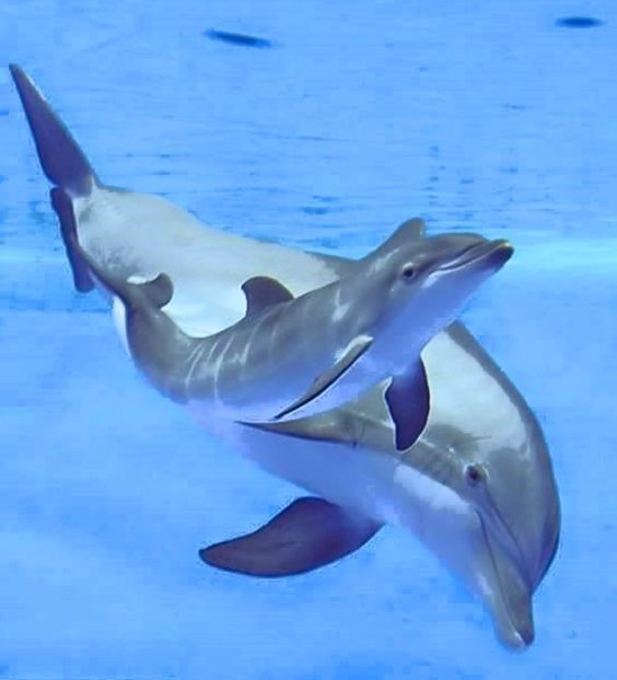 Dolphins: Mama/Baby