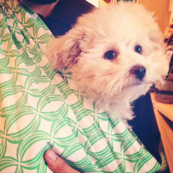 baby dog Henry at LMNOP