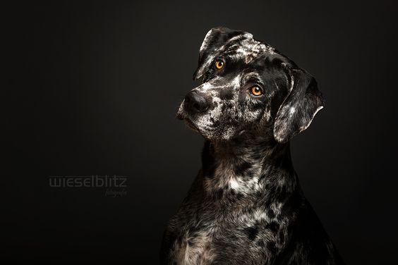 Perdita Lübbe Hundeakademie beim Wieselblitz (9)