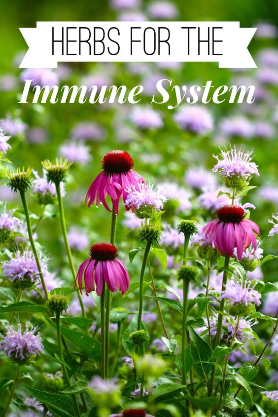 An {Updated} Introduction on Herbs for the Immune System | Blog Castanea
