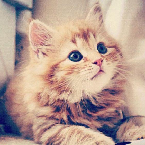 The #kittensofinstagram kitten of the day @aslan and kiska 😻💜 #cute #adorable #sweet #kitten #little #baby #cat #thanksgiving #animals #FF #dogs