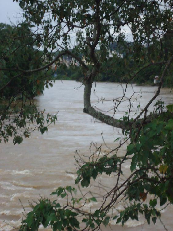 O Rio Paraíba do Sul por entre árvores
