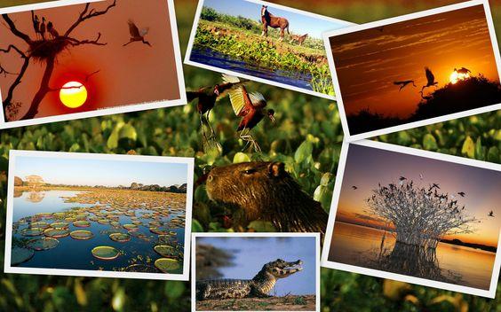 O Pantanal Mato-Grossense ocupa a parte oeste dos estados do Mato Grosso e do Mato Grosso do Sul, perfazendo 1,8% do território nacional. Estende-se ainda por parte do Paraguai, Bolívia e Argentina, onde é conhecido como chaco. É a maior planície de inundação contínua do planeta, coberta por vegetação em sua maior parte aberta, que configura uma das mais ricas e completas reservas de vida selvagem do planeta.