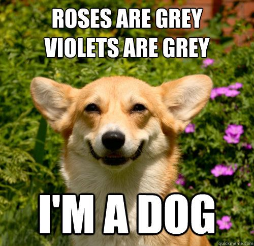 Image result for meme about dog valentines day