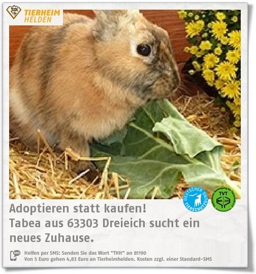 Tabea kam aus der Sicherstellung eines anderen Vereins zum Artgerecht Tierschutz e.V.  http://www.tierheimhelden.de/kleintier/tierheim-dreieich/japanerkaninchen/tabea/12325-2/  Tabea ist noch etwas scheu, gleichzeitig aber auch sehr neugierig. Für das Japanerkaninchen wird ein Zuhause in einem größeren Gehege gesucht.