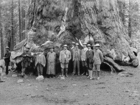 Präsident Theodore Roosevelt und John Muir in der Nähe des Grizzly Giant, Mariposa Big Tree Grove (1903) , -Im Bild auf der rechten Seite (1903) können Sie, unter anderem Präsident Theodore Roosevelt und John Muir vor dem unteren Teil des Rumpfes dieses Baumes stehen sehen. Das Bild auf der linken Seite zeigt einen großen männlichem Maultierhirsch (Odocoileus hemionus) der unter dem Grizzly Giant, hundert Jahre später, ruht.