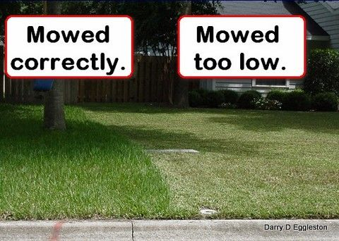 Grass Mowing Frequency — Gardeners Reach