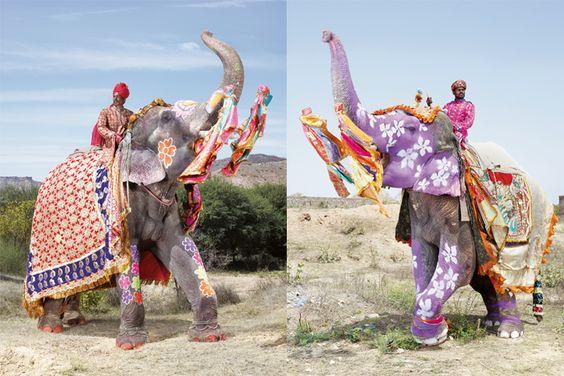 Défilé d'éléphants multicolores au festival de Jaipur en Inde - National Geographic France