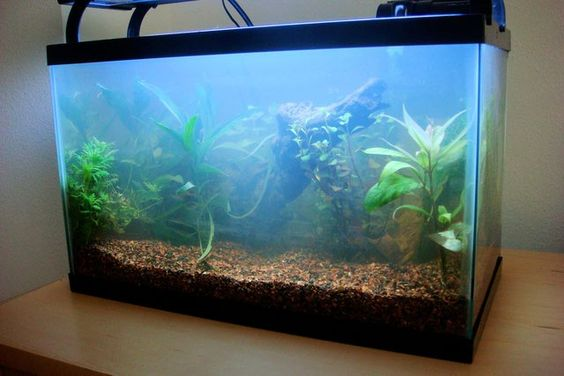 Aquarium fish tanks and water on pinterest for Why is my fish tank water cloudy