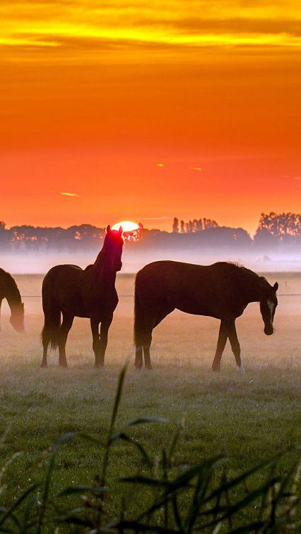 Horse photography - Beautiful horses at sunset.