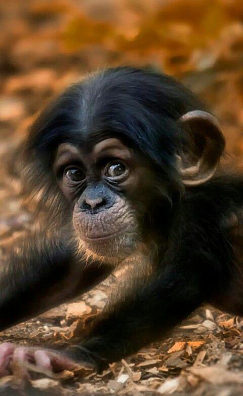 Niedlicher Kleiner Affe Monkey Baby Monkeybaby Kleiner Affe