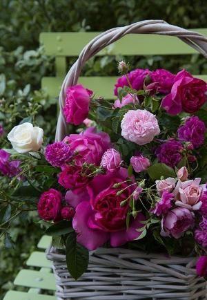 Adorável cesta de rosas do jardim ... por Antoinette