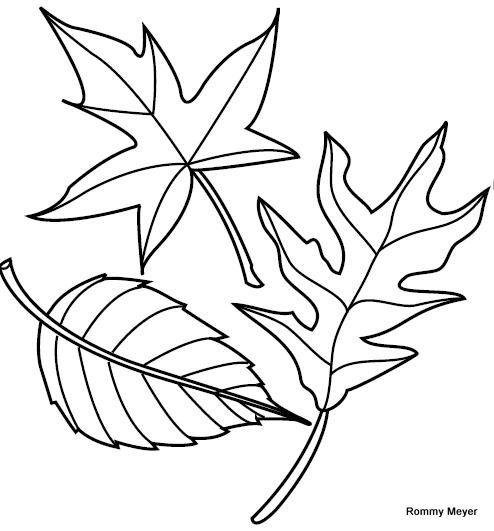 hojas de otoño para colorear