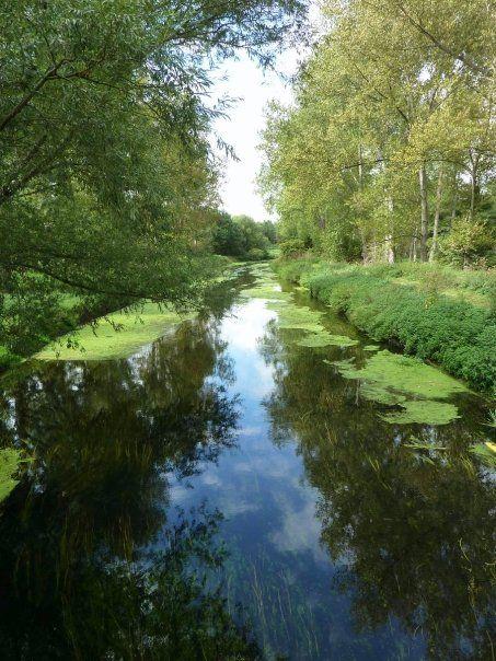Thetford Forest, UK