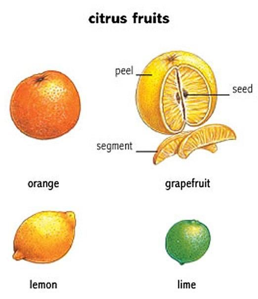 Citrus fruits basic English lesson. You will learn what a citrus fruit are and the vocabulary for various parts.:
