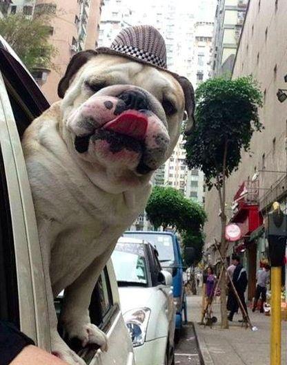 ¿Te gustan los viajes en coche?