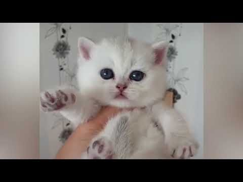 Cute Kittens Are A Miracle Funny Cat Videos Youtube With