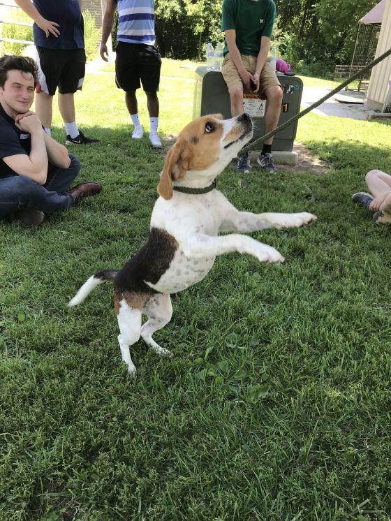 Adopt Lucy On Adoption Dogs Pet Adoption