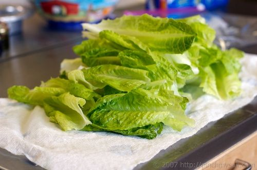 how to store fresh cut lettuce