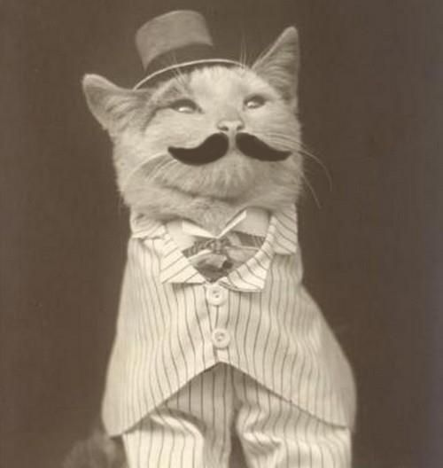 This cat is dressed better than you.