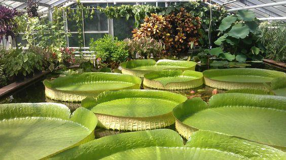 Botanischer Garten Braunschweig Victoria Seerose Beautiful Architecture Places To Visit Great Places